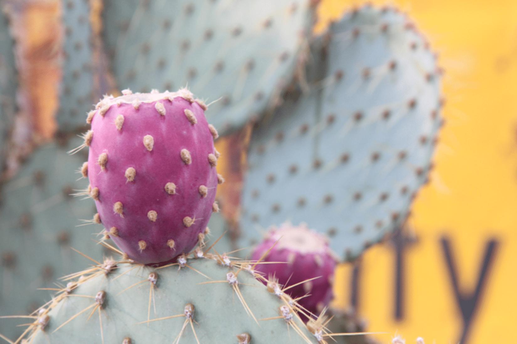 Route 66 Kaktus