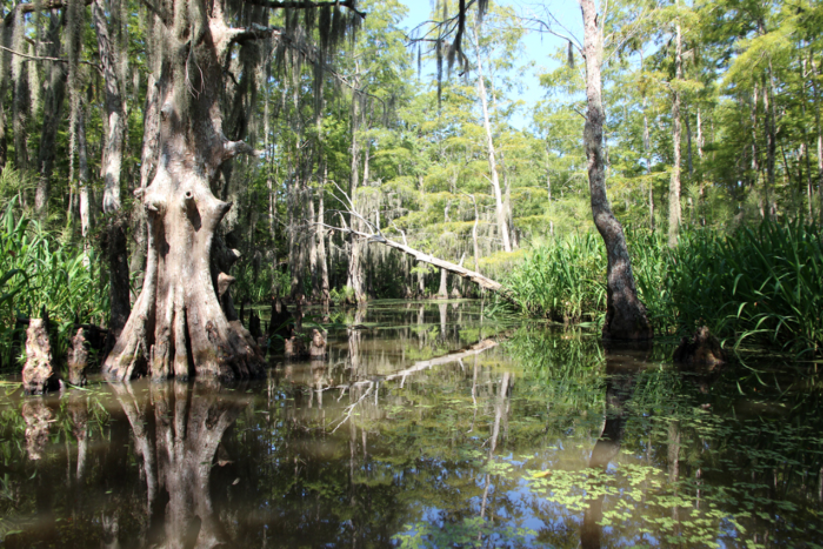 Louisiana Reiseblog