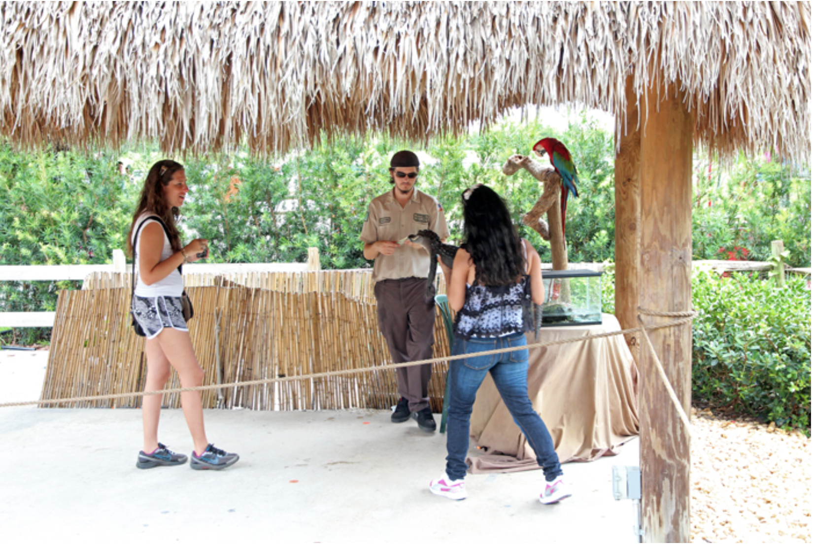 Everglades Tiershow