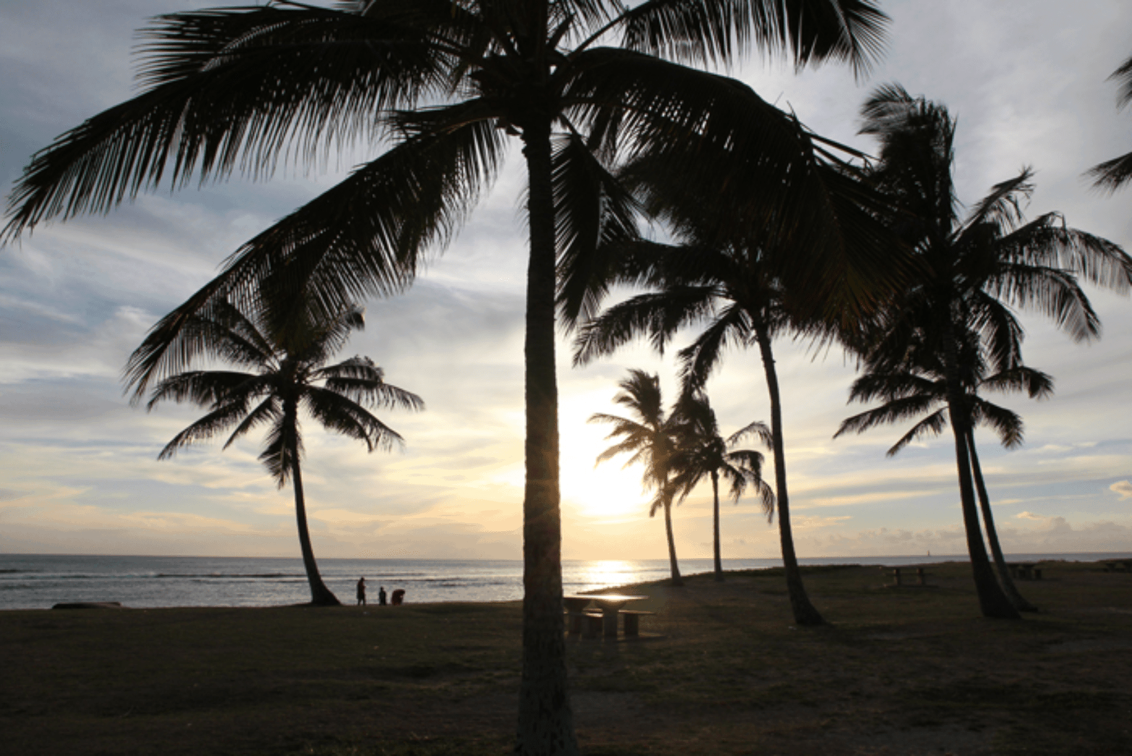 O'ahu Sonnenuntergang Palmen
