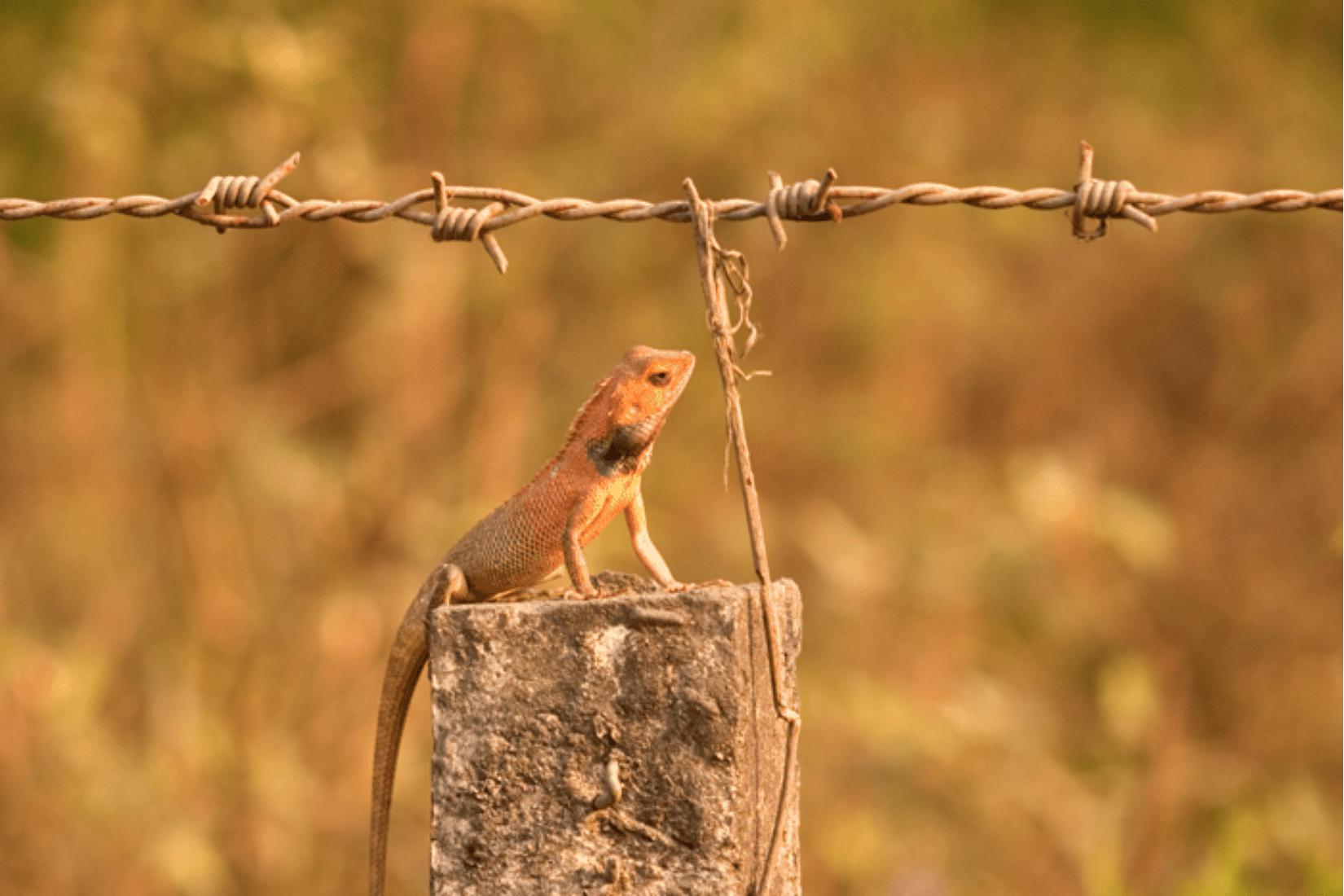 Chitwan Reiseblog