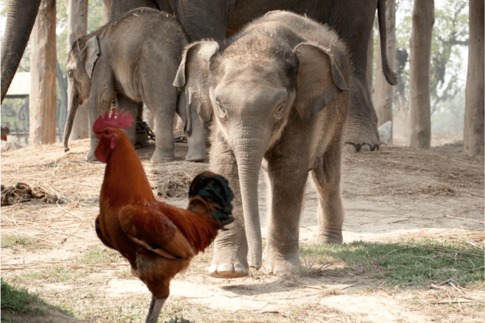 Chitwan Nationalpark Reise