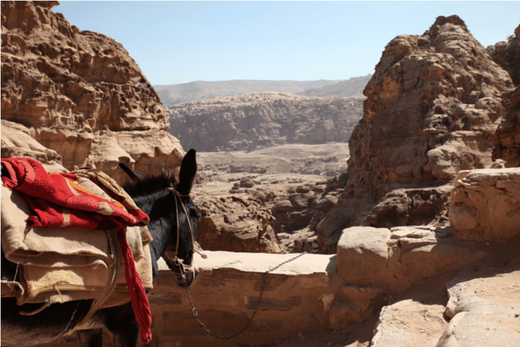 Petra Wanderung Pferd