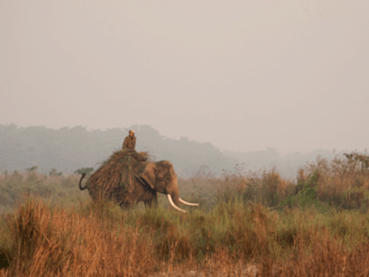 Chitwan Nationalpark Bericht