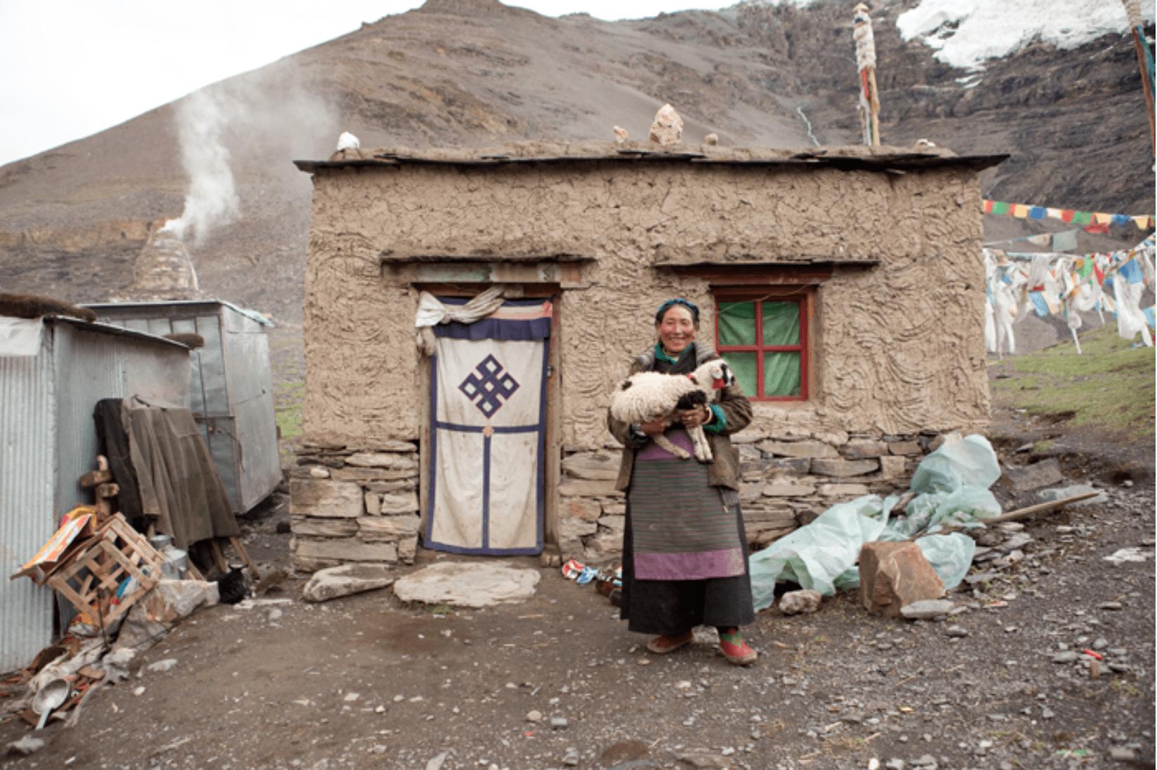 Tibet Einheimische Ziege