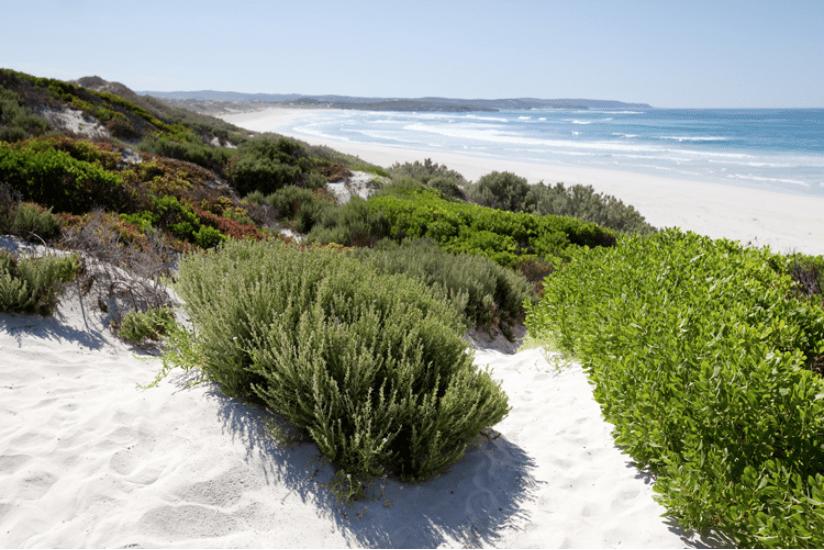 Kangaroo Island Reisen