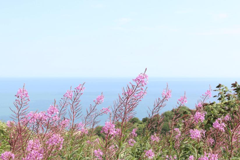Südengland Natur
