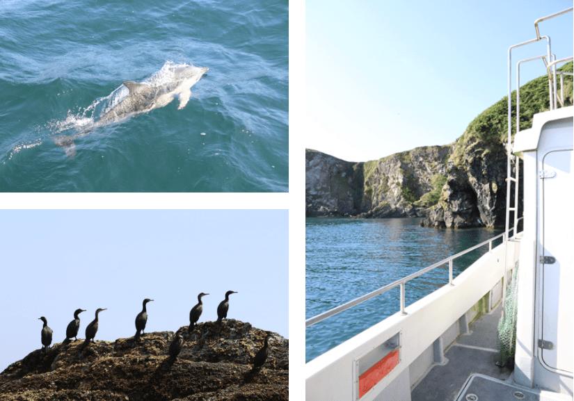 Irland Wildlife