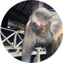 elephantvillage
