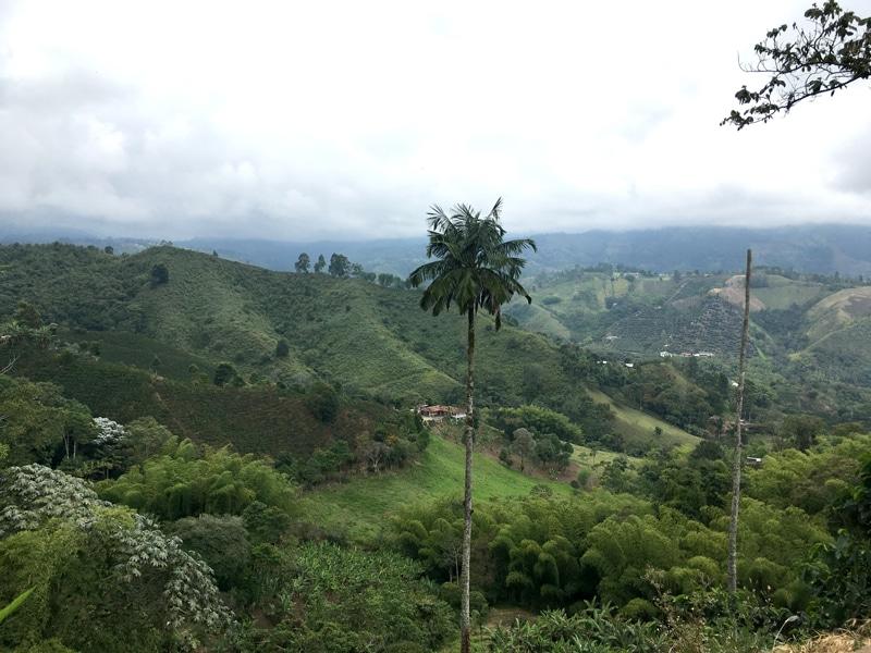 Kaffeeregion in Kolumbien - Rundreise Backpacking - Reiseblog Bravebird