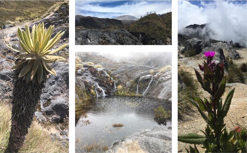 Kolumbien Rundreise - Parque los Nevados - Reiseblog Bravebird