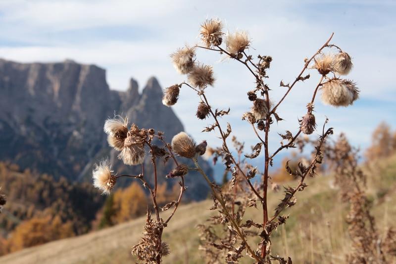 Seiser Alm im Herbst - Südtirol Reiseblog Bravebird