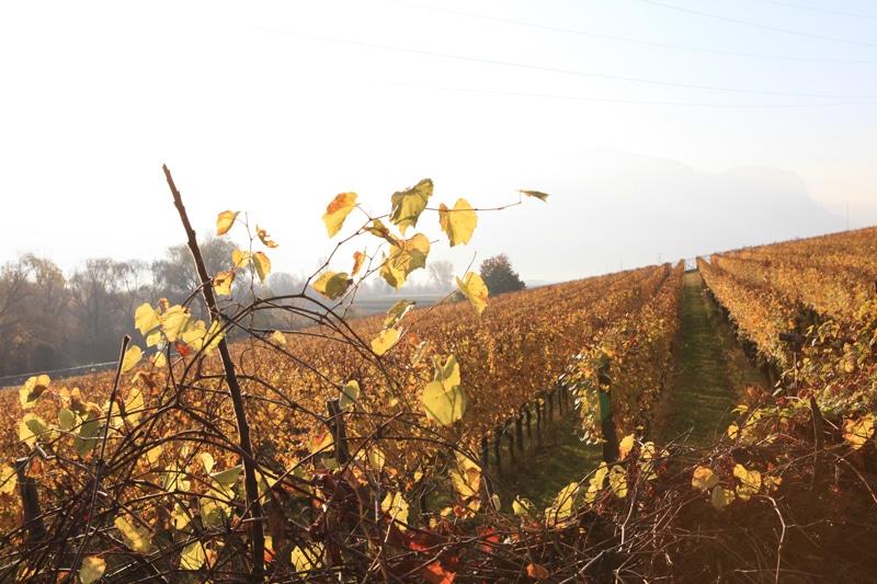 Südtirol Weinberge im Herbst - Kaltern - Reiseblog Bravebird