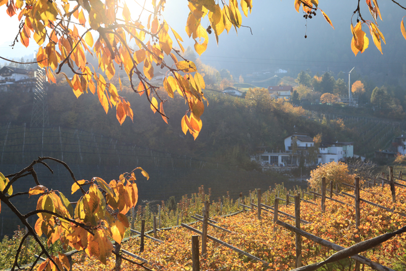 Südtirol Meraner Land - Reiseblog Bravebird
