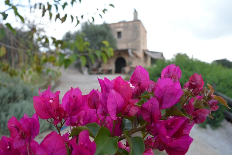 Kreta - The Olive Farm - Farm to table Event - Reiseblog Bravebird