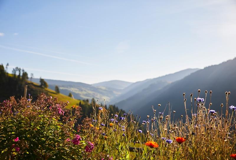 Österreich - Urlaub in Kärnten - Sophie Kirchner - Reiseblog Bravebird