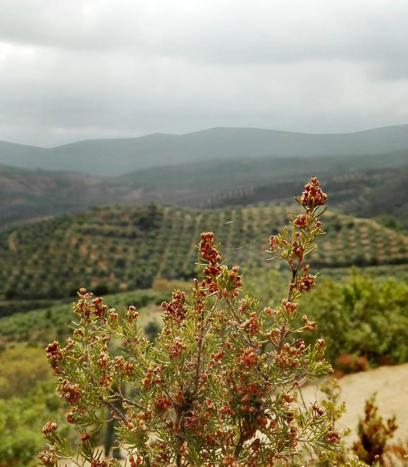 Kreta White Mountains - Reiseblog Bravebird