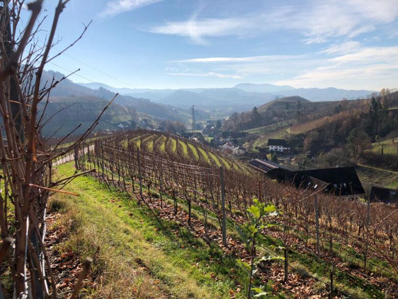 Oberkirch Badische Weinstraße - Reiseblog Bravebird