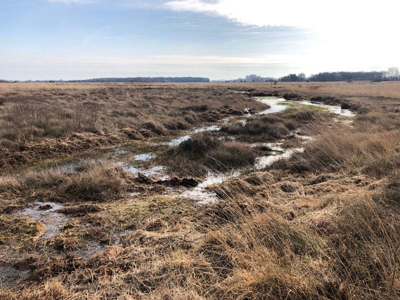 Heide und Moor in Niedersachsen - Oppenweher Moor - Reiseblog Bravebird