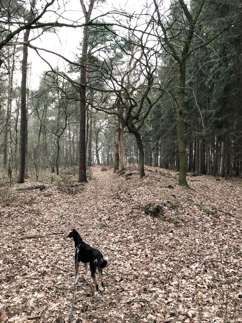 Urlaub in Niedersachsen - Reiseblog Bravebird