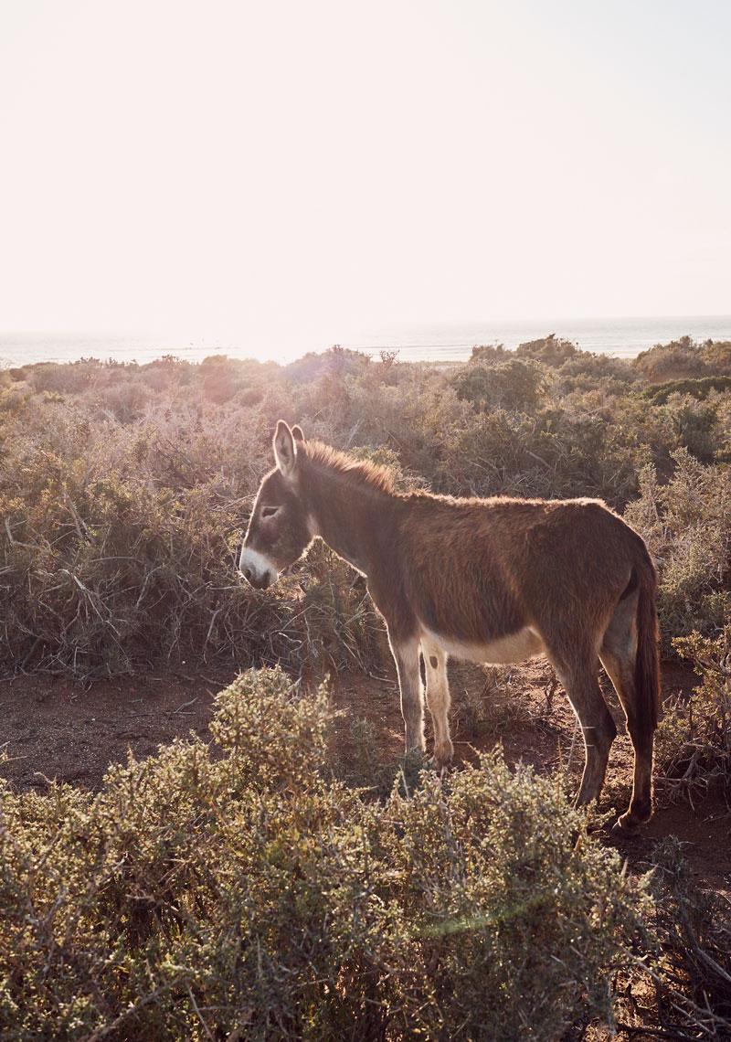 Tafedna Marokko Strassen - Reiseblog Bravebird