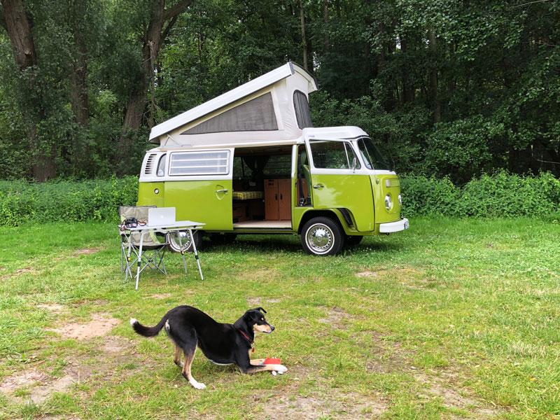 Camping mit Hund - Reiseblog Bravebird