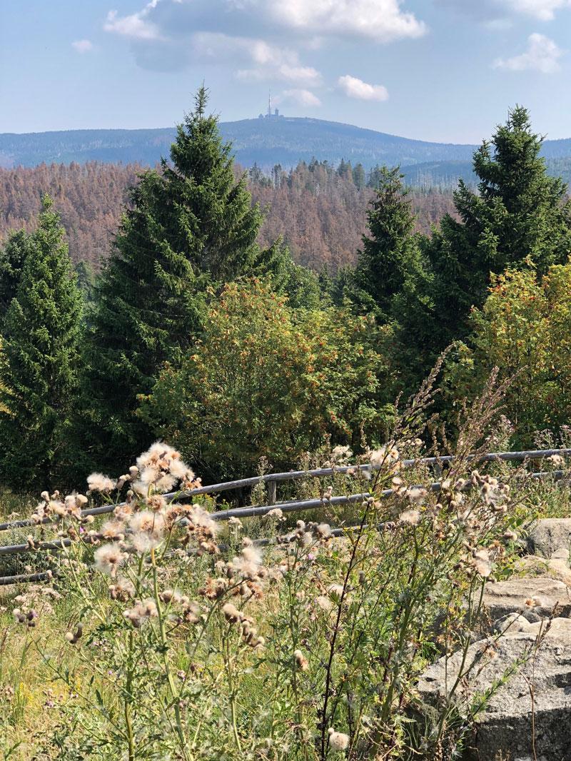 TorfHaus im Harz - Ausgangspunkt zum Brocken - Reiseblog Bravebird
