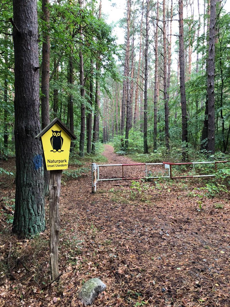 Wald bei Stubbenfelde - Reiseblog Bravebird