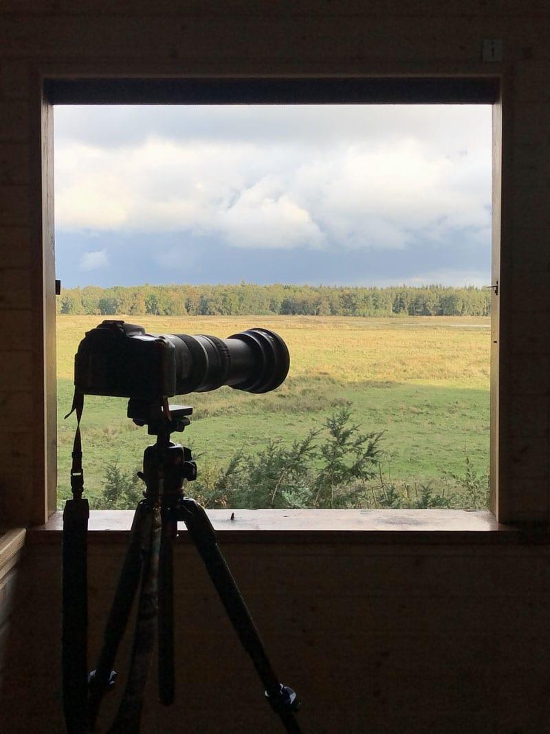 Fotografie Kurs im Darßer Wald - Hirsche - Reiseblog Bravebird