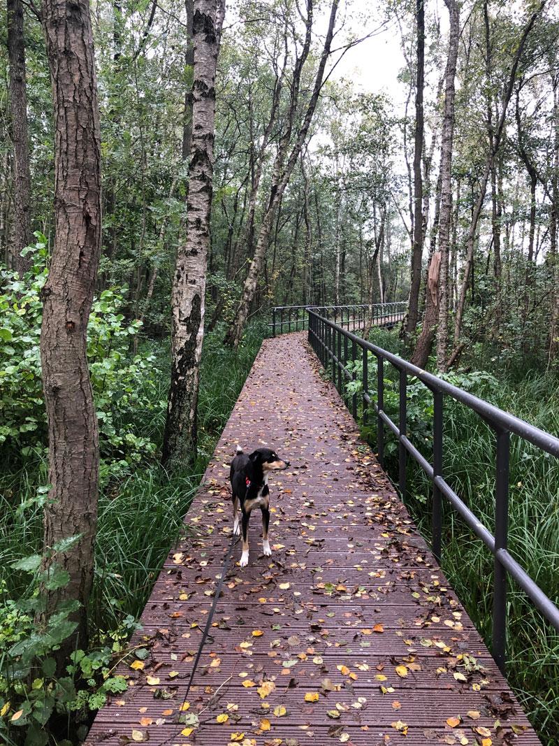 Moorerlebnispfad Zarrentin am Schaalsee - Reiseblog Bravebird