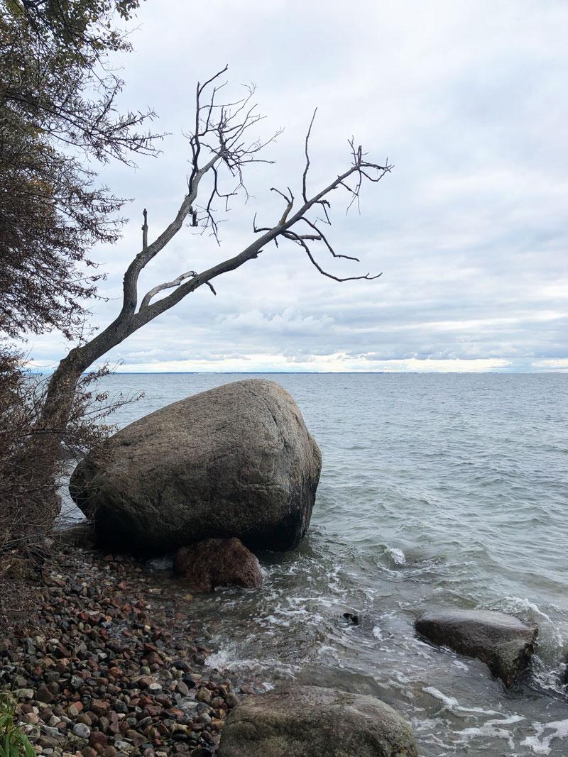 Naturführungen Geyer auf Mönchgut Rügen - Reiseblog Bravebird