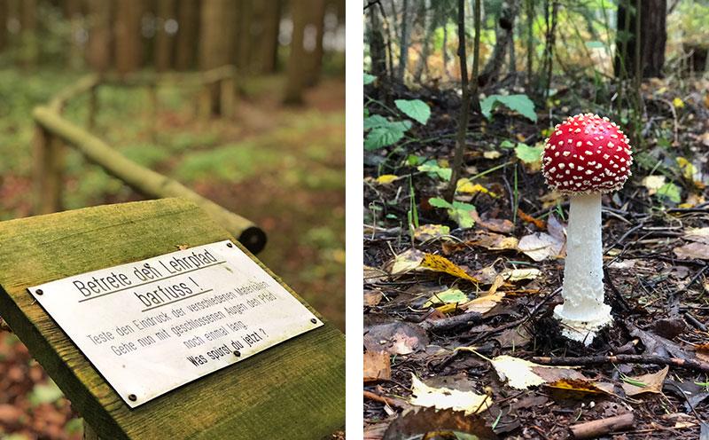 Wald der Sinne bei Buddenhagen - Reiseblog Bravebird