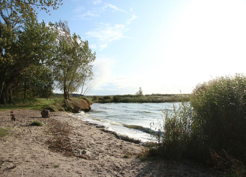 Warthe auf der Halbinsel Lieper Winkel - Reiseblog Bravebird