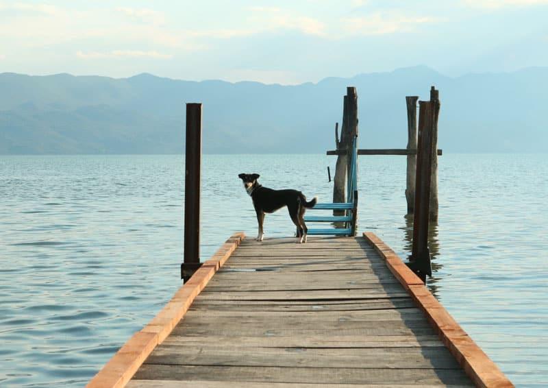 Reisen mit Hund nach Albanien - Reiseblog Bravebird