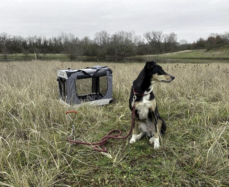 Reisen mit Hund - die beste Ausrüstung - Reiseblog Bravebird