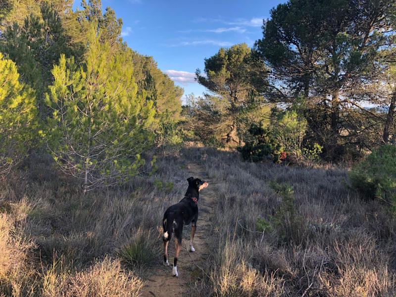 Wandern mit Hund auf Reisen - Reiseblog Bravebird