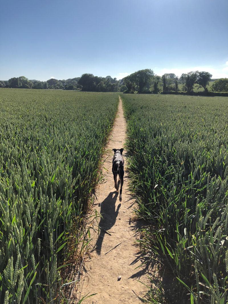 Reisen mit Hund durch England - Reiseblog Bravebird