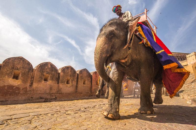 Elefantenreiten und Tierschutz - Reiseblog Bravebird