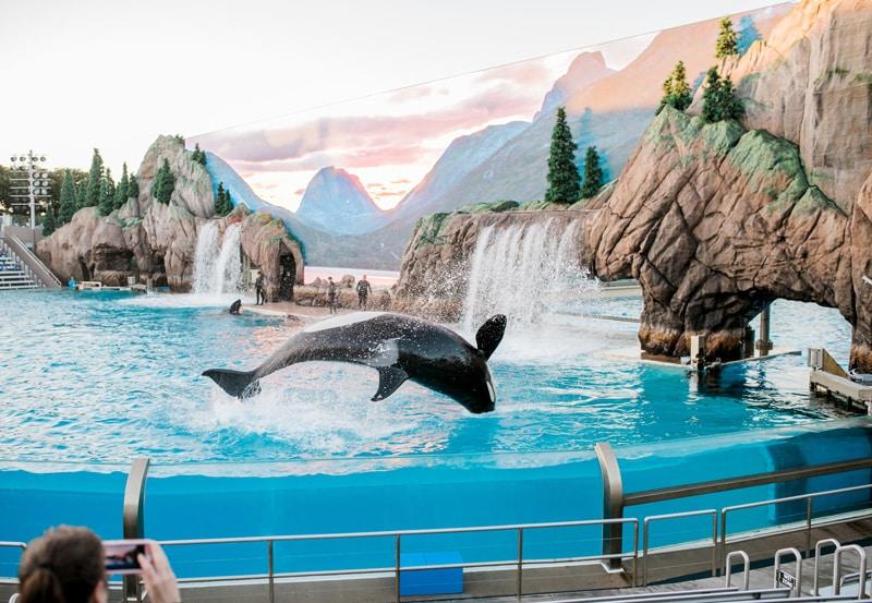 Warum du Delfinarien meiden solltest - Reiseblog Bravebird