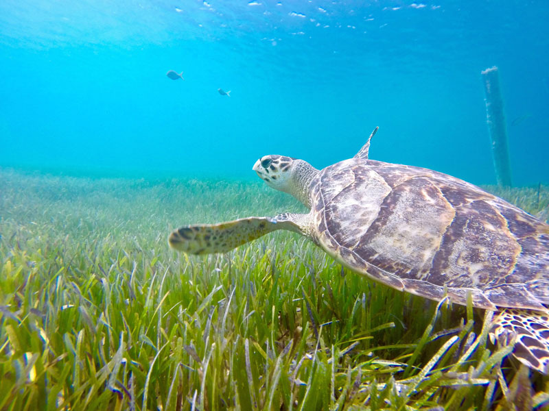 Schildkröten auf Reisen - Worauf achten? - Reiseblog Bravebird