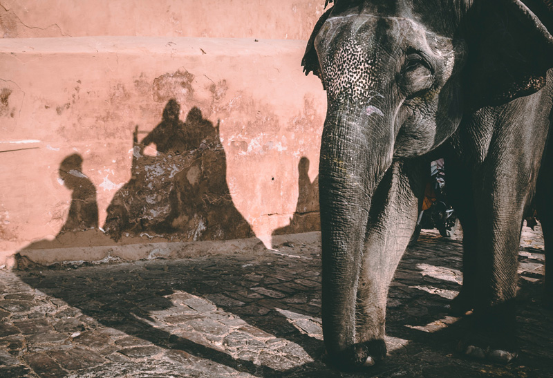 Elefantenreiten Tierquälerei - Reiseblog Bravebird