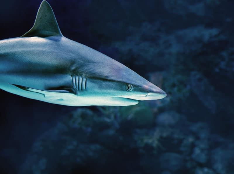 Haifischflossensuppe meiden - Reiseblog Bravebird