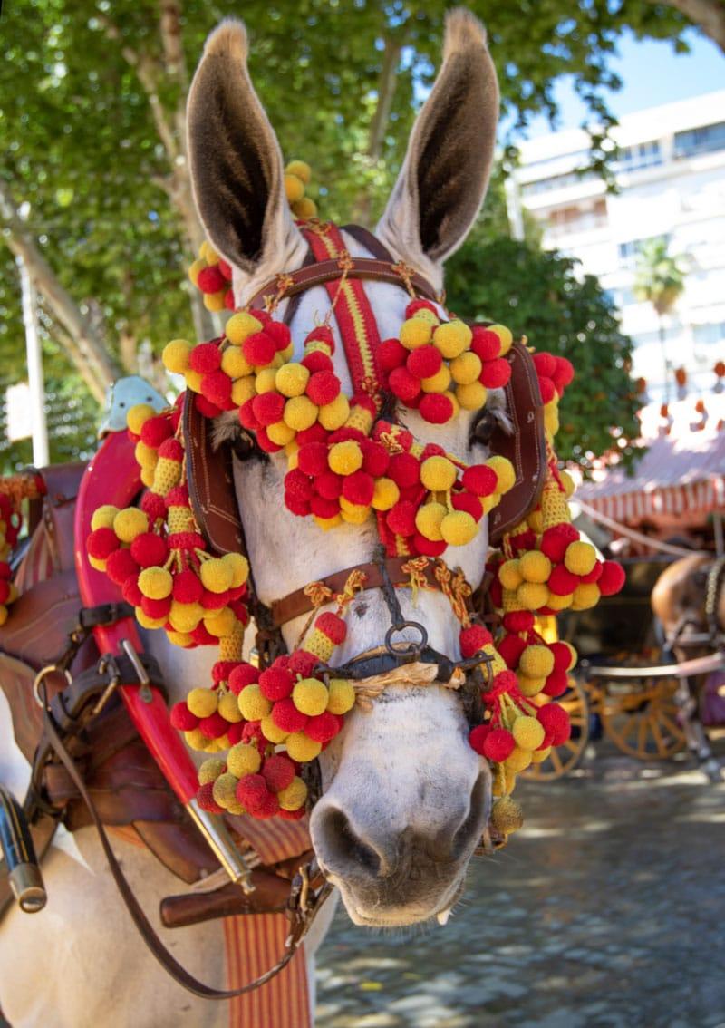 Tierschmuck Pferd Tierquälerei - Reiseblog Bravebird