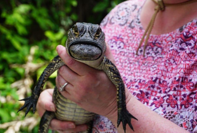 Selfies mit Wildtieren - Tierschutz - Reiseblog Bravebird