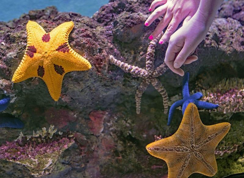 Tiere unter Wasser Tierschutz - Reiseblog Bravebird