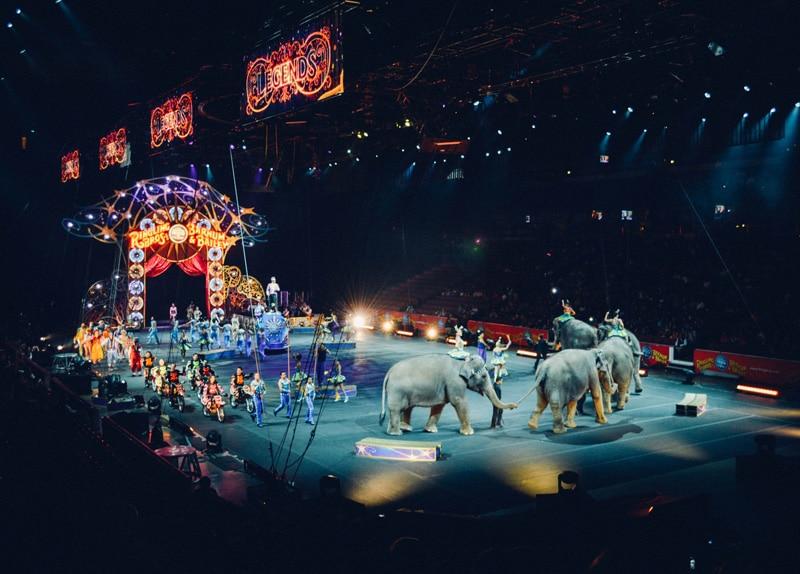 Warum du nicht in einen Zirkus gehen solltest - Reiseblog Bravebird