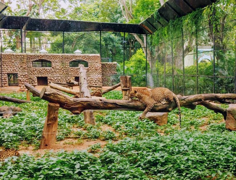 Tierschutz hört bei Zoos auf - Reiseblog Bravebird