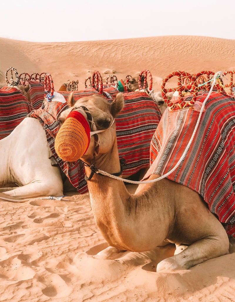 Tierschutz auf Reisen - Kamelreiten - Reiseblog Bravebird