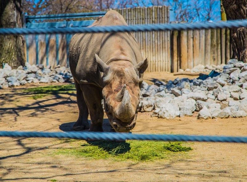 Wildtiere im Zoo - Gegenteil von Tierschutz - Reiseblog Bravebird