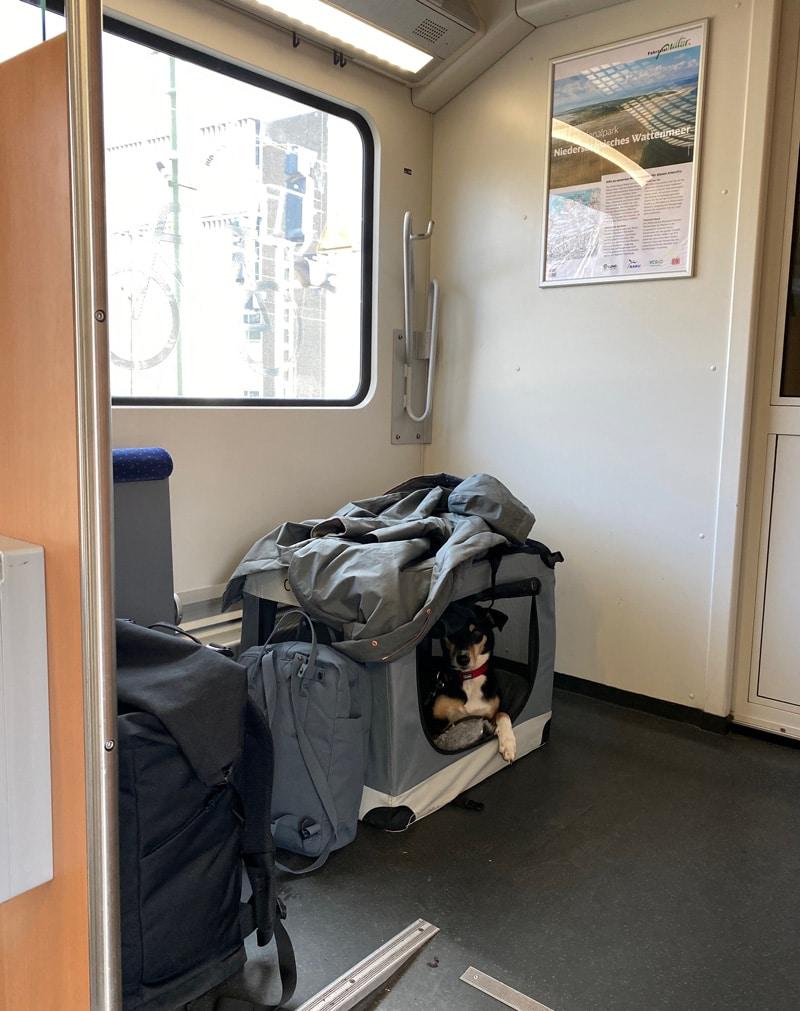 Mit Hund im Fahrradabteil - Reiseblog Bravebird
